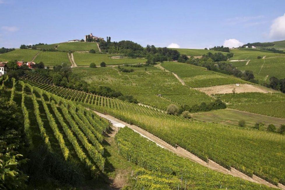 vigne piemonte UNESCO