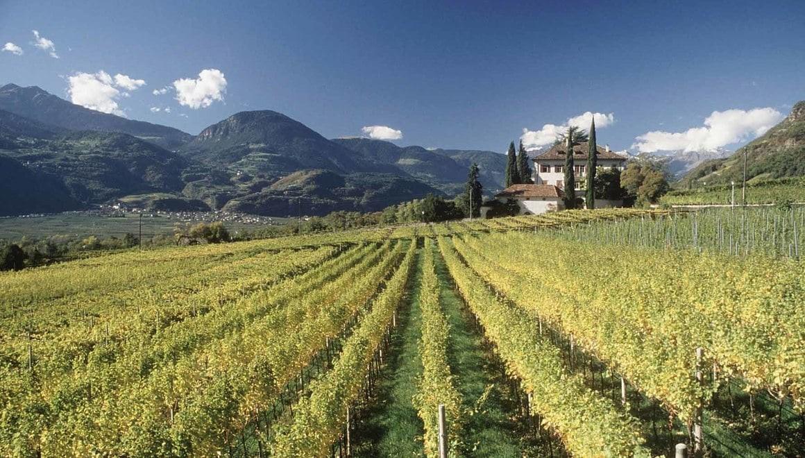 5 sentieri di Vini in Alto Adige